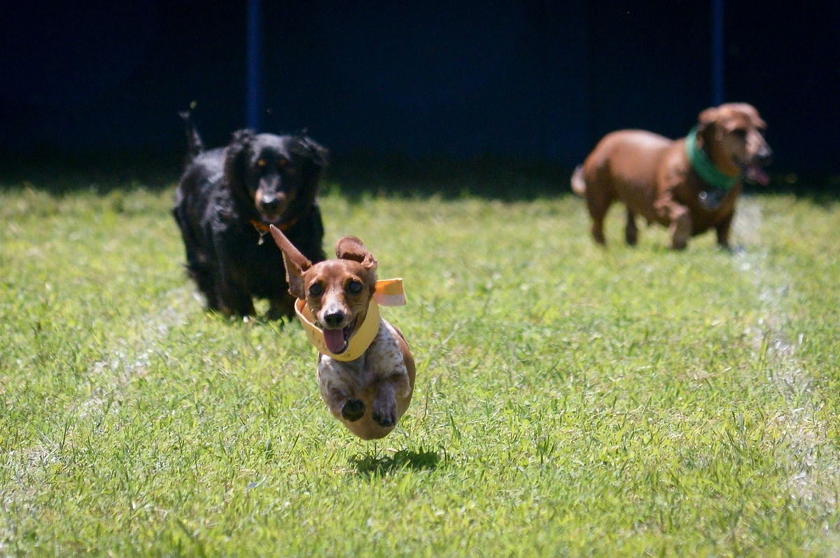 Lodsworth Dog Races